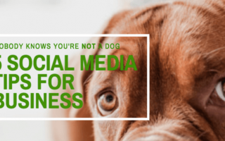 Nobody Knows You're NOT A Dog: 5 Social Media Tips For Business